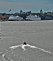 Picture Title - Bote, Bird & Port