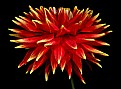 Picture Title - spikey dahlia