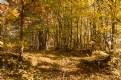 Picture Title - autumn track