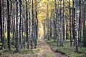 Picture Title -  in forest