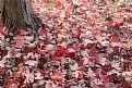 Picture Title - Red Maple Leaves