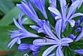 Picture Title - Blue Flourishing