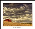 Picture Title - Autumn Field