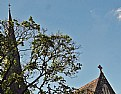 Picture Title - Church & Tree