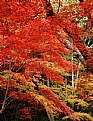 Picture Title - a fall colour