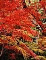 a fall colour