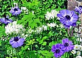 Picture Title - Violet,White & Gree