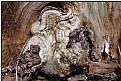 Picture Title - trunk gnome