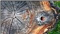Picture Title - trunkscape
