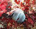 Picture Title - tube worm