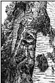 birchbark face