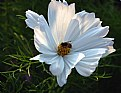 Picture Title - White flower