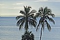 Picture Title - Tropical Icon