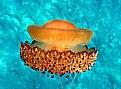 Picture Title - medusa