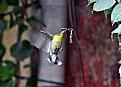 Picture Title - Sun Bird