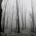 Picture Title - fog