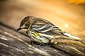 Picture Title - Sleeping Bird