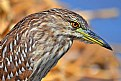 Picture Title - Blue heron