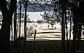 Picture Title - Dark forest