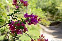Picture Title - #caminho das flores