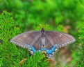 Picture Title - Butterfly and Cypress