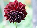 Picture Title - Red flower