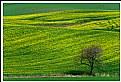 Picture Title - *** LandScape  I ***