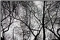 Picture Title - branching