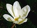Picture Title - Seven Petals