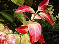 Picture Title - Leaf