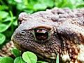 Picture Title - Eye of Toad