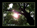 Picture Title - Tree25