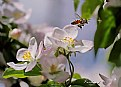 Picture Title - Bee..