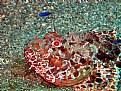 Picture Title - scorpion fish