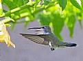 Picture Title - Nature landing