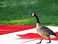Picture Title - Happy Canada day