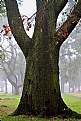 Picture Title - Old tree
