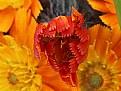 Picture Title - Orange Flower
