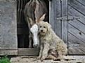 Picture Title - Carla and Sandor- barn buddies