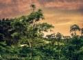 Picture Title - Beautiful Tea Garden