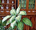 Picture Title - Pharmacy & Plant