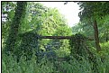 Picture Title - overgrown garden