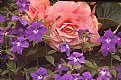 Picture Title - Begonias & Violets