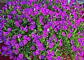 Picture Title - Floral Colour