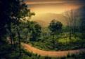 Picture Title - Tea Garden...