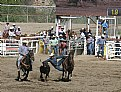 Picture Title - Steer Wrestling