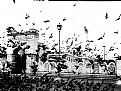 Picture Title - Pigeons