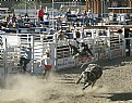 Picture Title - Bull Toss