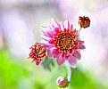 Picture Title - Floral 24