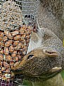 Picture Title - Squirrel